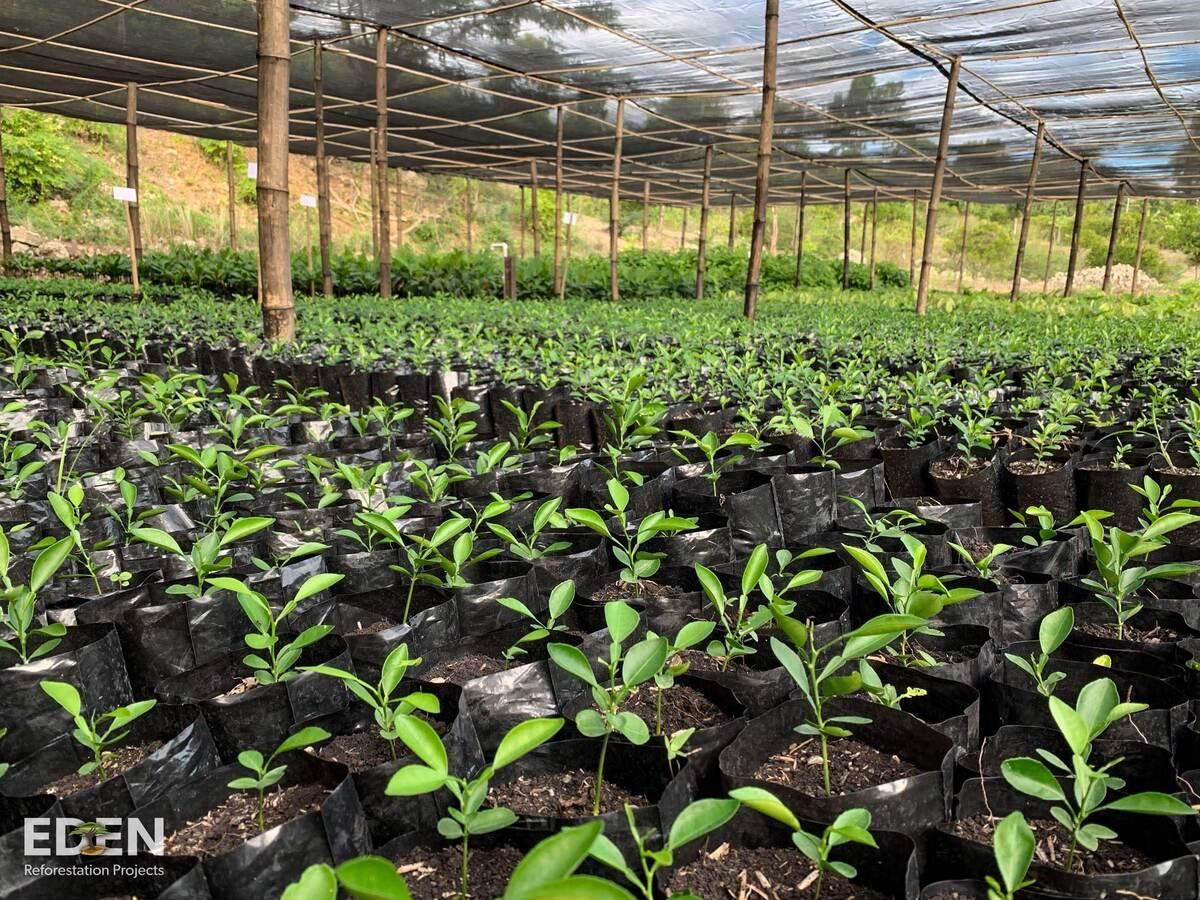 Planted trees from Organic Vegan Dark Chocolate purchase