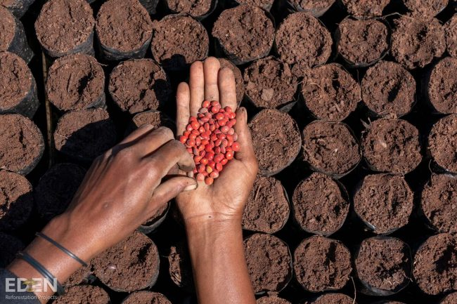Seeds to plant trees from Organic Vegan Dark Chocolate purchases